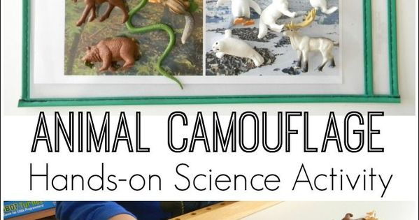 animal camouflage hands on science activity learning animals and about animals. Black Bedroom Furniture Sets. Home Design Ideas