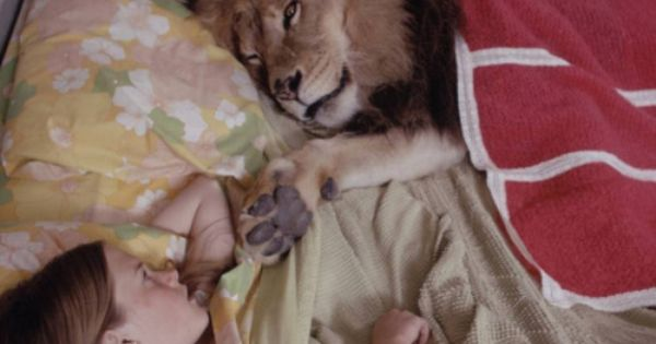 Melanie Griffith (Tippi Hedren's daughter) in bed with the family's pet lion.