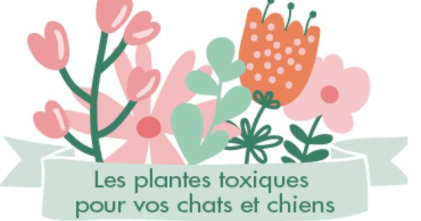 plantes toxiques et dangereuses pour animal chien chat jardin int rieur chiens pinterest. Black Bedroom Furniture Sets. Home Design Ideas