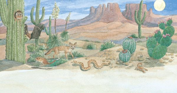Desert plants and animals have developed ways to survive ...