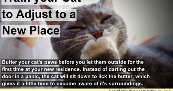 Pets Hacks Tips And Tricks Lifetricks Pet Hacks Pet Remedies Pet Safety