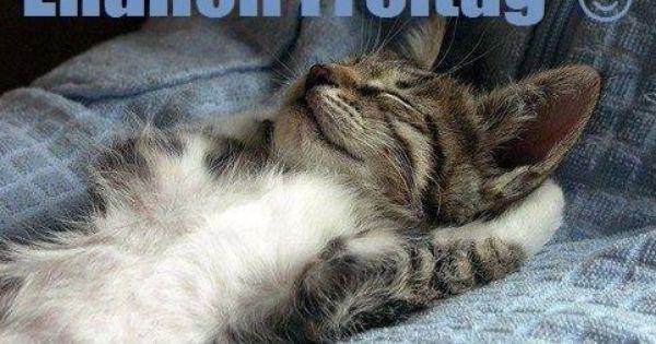 Endlich Freitag Katzen Lustige Tiere Katzenbabys