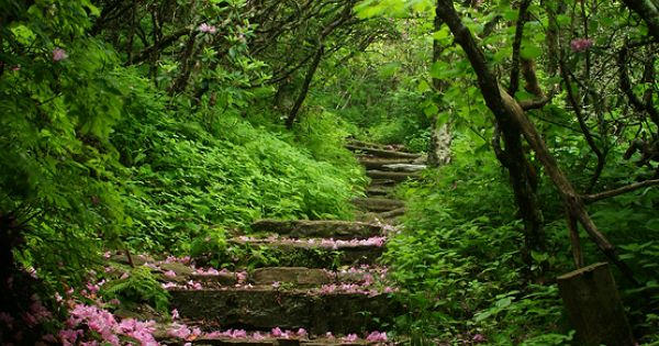 *A good walk through Craggy Gardens Blue Ridge Parkway North Carolina