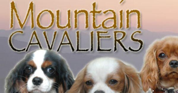 Mountain Cavaliers Near Asheville Nc Cavalier King Charles