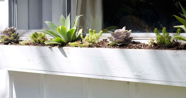 The best plants for a low maintenance window box low for Best low maintenance plants