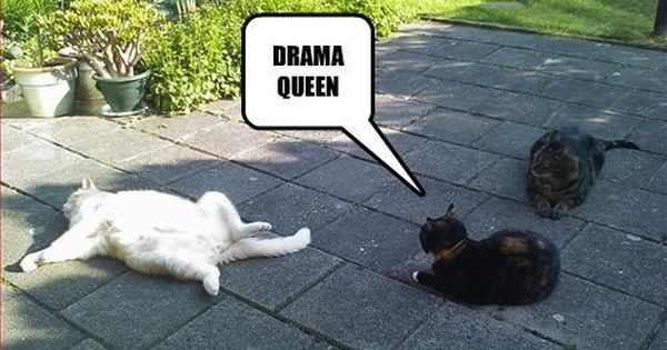 Mondays With Merlin Catty Drama Queens The Dalai Lama Hammock Time Funny Cats Dogs Friday Humor Funny Cats