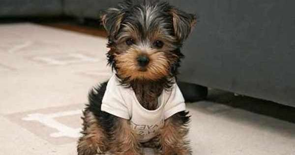 Small House Dogs That Don T Shed Yaoqunsz Images Gallery