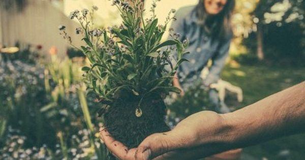 5 conseils pour acheter des plantes sans se planter for Acheter des plantes