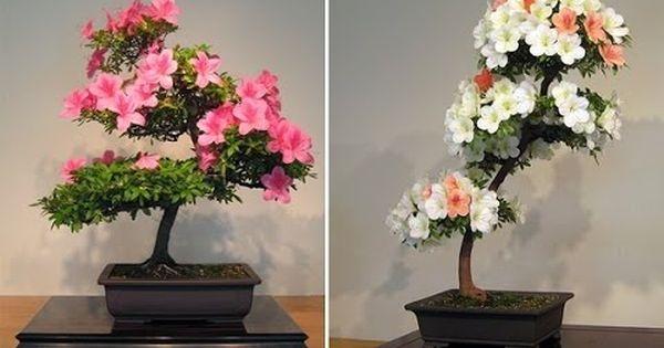 17 Eye Catching Bonsai Decoration Ideas For Indoors Bonsai Tree Types Flowering Bonsai Tree Bonsai Tree