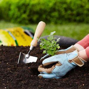 Plan The Year With The Home Depot Garden Club Calendar Garden
