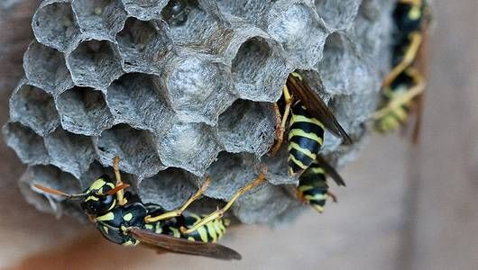 cfcd6ba4617d0a490a9f857225f51710 - How To Get Rid Of Wasps In A Stone Wall