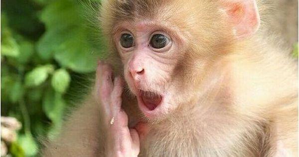 صور قرود أجمل صور وخلفيات قرود مضحكة ومتنوعة موقع حصري Monkey Pictures Rabbit Pictures Cute Monkey
