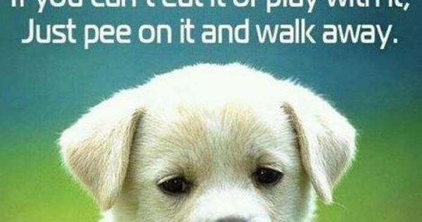 dog quotes...:) words of wisdom sis