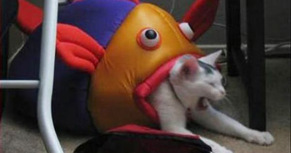 the fish gets it now funny cats
