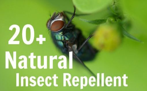 20 Natural Diy Bug Spray Recipes For You And Your Garden Homestead Living Pinterest