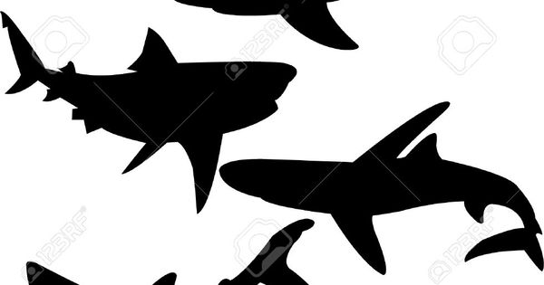 shark shadow images - Google Search   Sharks, Whales and ...