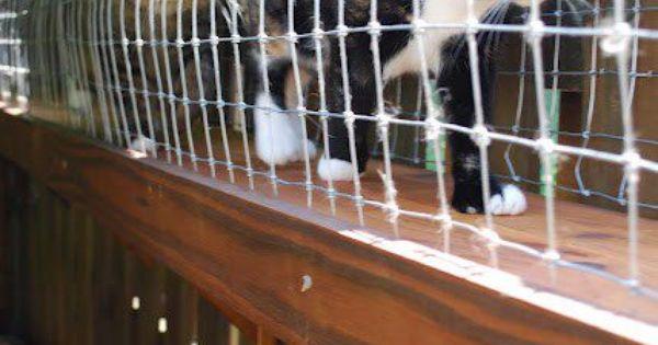 Cat Walkway Great Alternative For Indoor Cats That Like