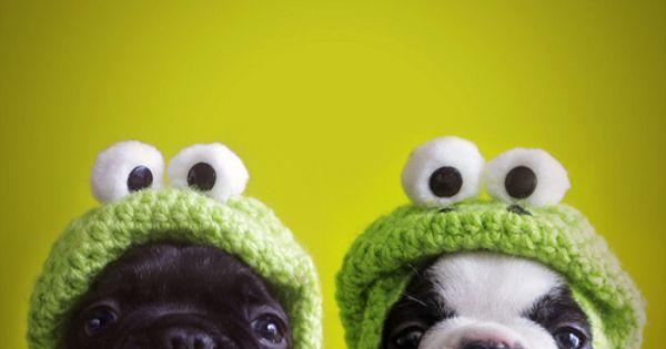 #french bulldog boston terrier frog beanie puppy dog cute
