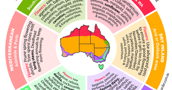 Spring flower planting guide by temperate zones australia for Gardening zones australia