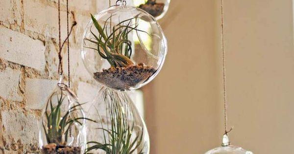 Diy d co avec des plantes succulentes en 80 photos jardins balcons et lille - Deco jardin interieur lille ...