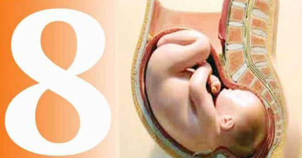 اعراض الحمل في الشهر الثامن ببنت هي موضوع اليوم للحديثن عنه للتعرف على هذه الأعراض وكيفية التعرف على نوع الجنين خلال ال Ashley Johnson Selina Kyle Karen Page