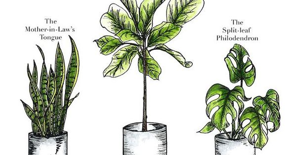Providing Tree And Plant Care: Illustrated Indoor Plant Care Watering Guide