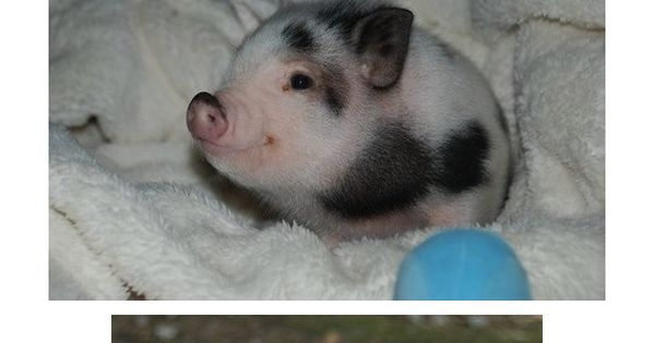 oh my. wook at all the wittle baby aminals! overloaded with cuteness!