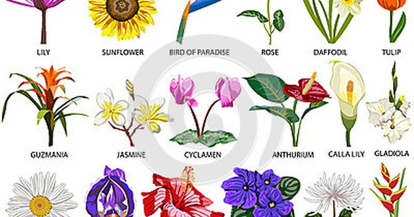 How Many Flowers Species Are There In The World How Much Many Flower Images With Name Different Types Of Flowers Flower Names