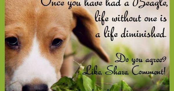 110 Facebook Beagle Cute Puppies I Love Dogs