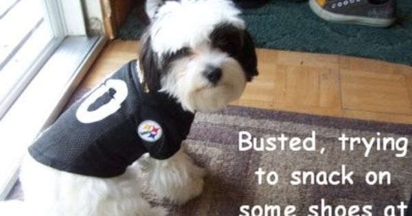 Pittsburgh Steelers Dog Spawty Pittsburgh Steelers Steelers