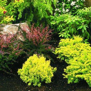 Love This Color Palette Chartreuse Pink With Black Mulch And A