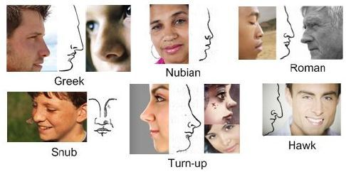 Nose Types With Pictures Nose Types More Like This If You Click Through Nose Types Nose Shapes Shape Chart