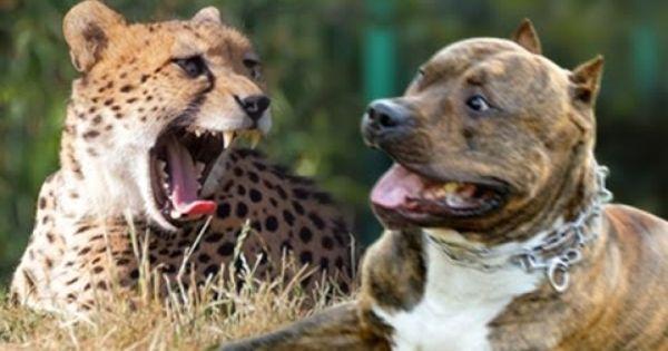 Pin On Found Dogs Colorado Founddogscolorado