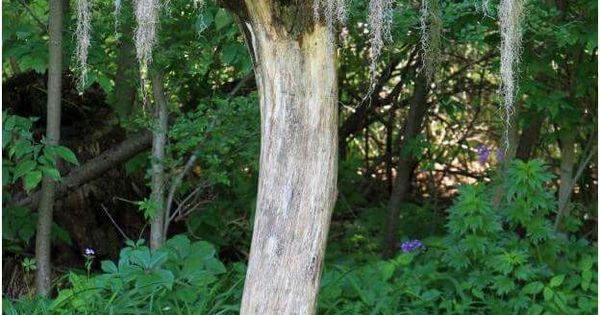 Re imagining an old stump what a pretty idea outdoors for Tall tree stump ideas