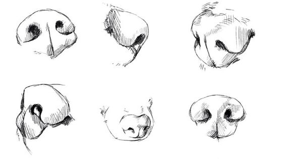 dog 39 s nose reference tutorial by ryky art tutorials and. Black Bedroom Furniture Sets. Home Design Ideas