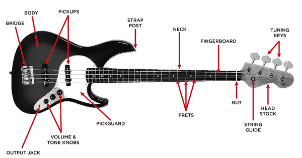 The Anatomy Of A Jazz Bass