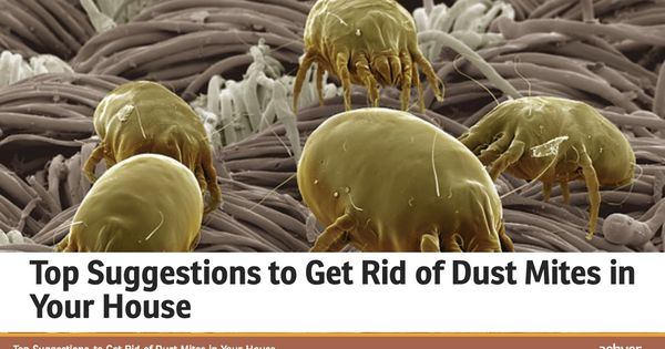Top Suggestions To Get Rid Of Dust Mites In Your House
