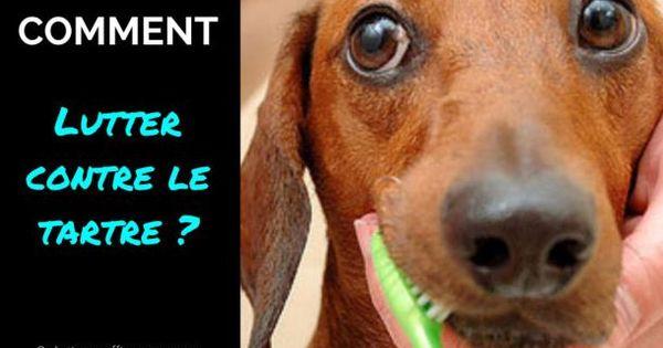 Enlever tartre du chien id es pour chien pinterest - Comment enlever le tartre ...