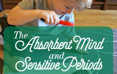 absorbent mind theory Maria montessori's theory of education analyzed into eight factors  the child's absorbent mind is the driving force behind montessori's theories of how.