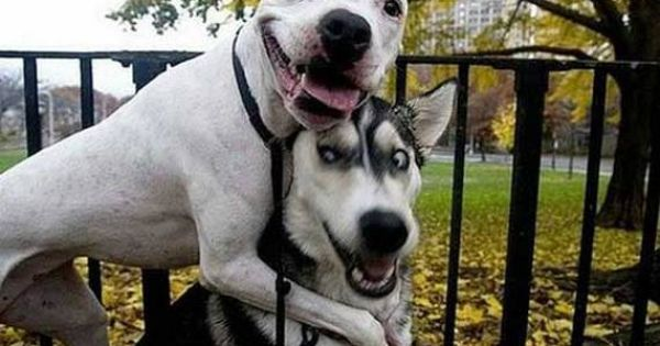 Funny dogs (Funny Animals) - http://relolver.com/funny-dogs-7/