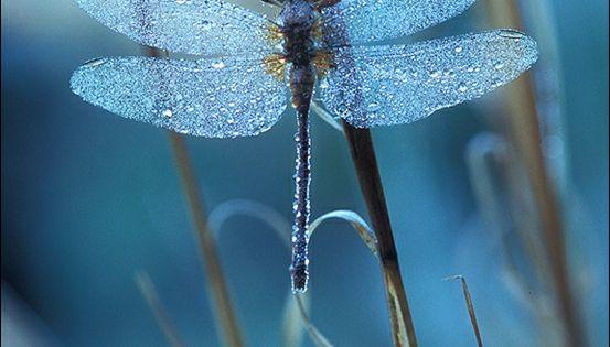 24 Extraordinary Moments of Rain and Dew Photo, ¿De verdad será azul?
