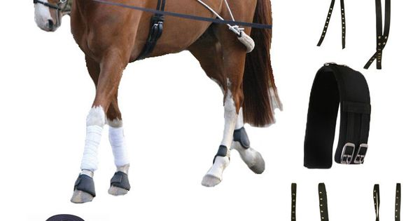 Horse Pony Cob Schooling Lunging Roller Training Aid