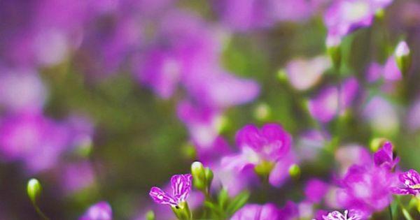 Purple Iphone 6 Wallpaper 14276 Wallpaper: Beautiful Purple Flower Field Blur Bokeh #iPhone #6