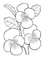 Violet Coloring Pages Flower Coloring Sheets Printable Flower