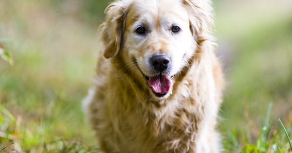Senior Cat And Dog Health What You Should Know Senior Cat