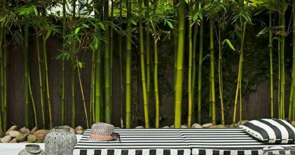 comment planter des bambous dans son jardin gardens patios and backyard. Black Bedroom Furniture Sets. Home Design Ideas