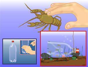 How To Make A Crawfish Trap Crawfish Traps Fish Fishing Tips