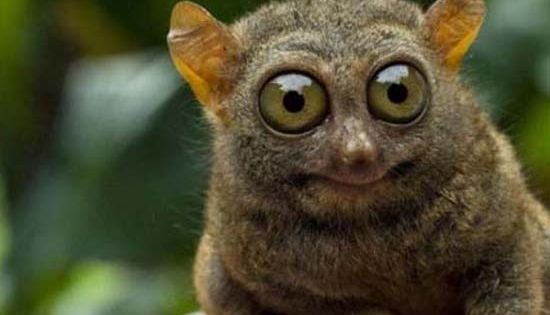 Funny Eyeballs | Big Eyes – Funny Animals | 1000 Funny ...