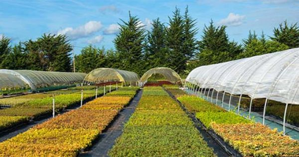 Leaderplant vente de plantes arbres arbustes bambous for Vente plante jardin