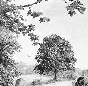 How To Draw Realistic Trees And Foliage Realistic Drawings Tree Drawing Pencil Drawings